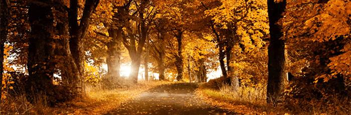 Autumn-Article