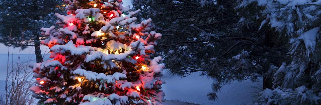 christmas-tree_article